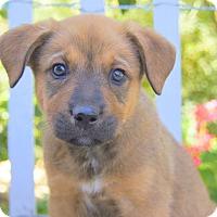 Adopt A Pet :: Sydney von Portia - Thousand Oaks, CA
