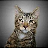 Adopt A Pet :: Carlisle - Montgomery, IL