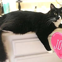 Adopt A Pet :: Jolly - Montclair, CA