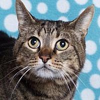 Adopt A Pet :: WHISKEY - Pt. Richmond, CA