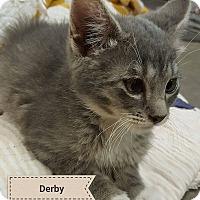 Adopt A Pet :: Derby - Overland Park, KS