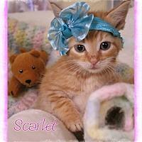 Adopt A Pet :: Scarlet - Shippenville, PA