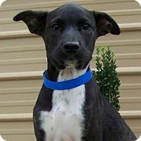 Adopt A Pet :: Yoshi - Madisonville, TN