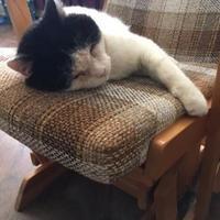 Adopt A Pet :: Wilson - Toronto, ON