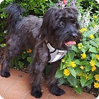 Adopt A Pet :: Allaster - Smyrna, GA