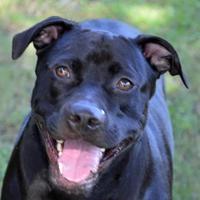 Adopt A Pet :: Daisy - Englewood, FL