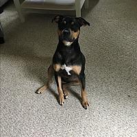 Adopt A Pet :: Luke - Staunton, VA