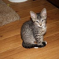Adopt A Pet :: Sparky - Tampa, FL