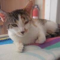 Adopt A Pet :: 9964 Peaches - Erie, PA