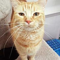 Adopt A Pet :: Taryn - McPherson, KS