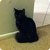 Adopt A Pet :: Thunder - West Dundee, IL