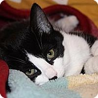 Adopt A Pet :: Sidney (LE) - Little Falls, NJ