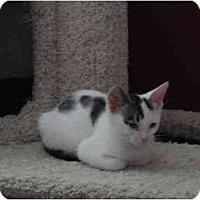 Adopt A Pet :: Grant - Davis, CA