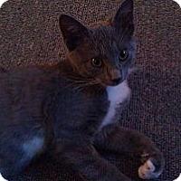 Adopt A Pet :: Tippey (JT) - Little Falls, NJ