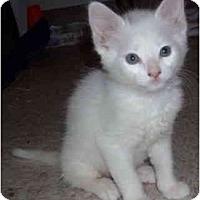 Adopt A Pet :: French Fry - Davis, CA