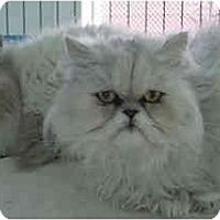 Adopt A Pet :: Dahlia - Davis, CA