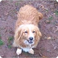 Adopt A Pet :: Cinnamon - Murfreesboro, TN