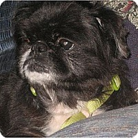 Adopt A Pet :: Mobely-MD - Mays Landing, NJ