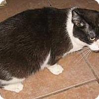 Adopt A Pet :: Ariel - Chandler, AZ