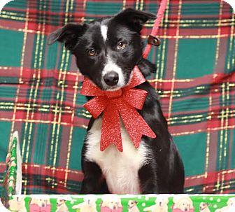 Border Collie Mix Dog for adoption in Twin Falls, Idaho - Matilda