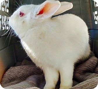 Other/Unknown Mix for adoption in Tustin, California - Blossom