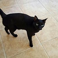Adopt A Pet :: Willis - Venice, FL