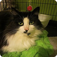 Adopt A Pet :: Pink - Coos Bay, OR