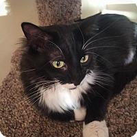 Adopt A Pet :: Sadie - Roseville, MN