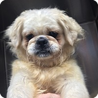 Adopt A Pet :: Holmes - Oak Ridge, NJ