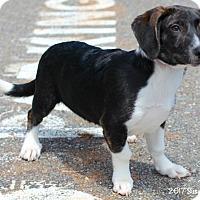 Adopt A Pet :: Buster - Bedford, VA