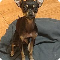 Adopt A Pet :: Sissy - Norman, OK