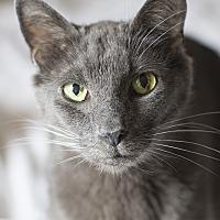 Adopt A Pet :: Tango - Chicago, IL