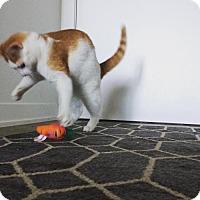Adopt A Pet :: Orion - Toronto, ON
