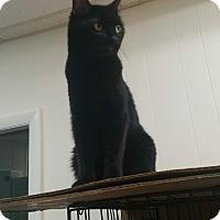 Adopt A Pet :: Marlie - Plainville, MA