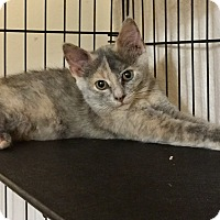 Adopt A Pet :: Faye Dunaway - Chicago, IL