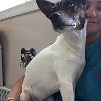 Adopt A Pet :: MOE - Cleveland, TN