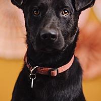 Adopt A Pet :: Astro - Portland, OR