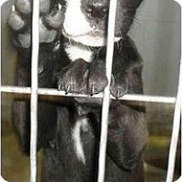 Adopt A Pet :: Destiny - Jacksonville, FL