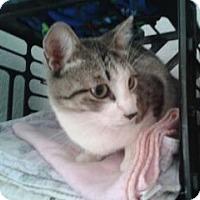 Adopt A Pet :: YoYo - Chandler, AZ