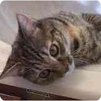 Adopt A Pet :: Siena - Arlington, VA