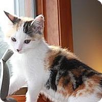 Adopt A Pet :: Lolly (LE) - Little Falls, NJ