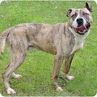 Adopt A Pet :: Jupiter - Chicago, IL
