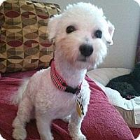Adopt A Pet :: JP - Hilliard, OH