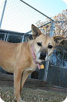 Labrador Retriever Mix Dog for adoption in Las Cruces, New Mexico - Maisie