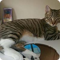 Adopt A Pet :: Murray - Merrifield, VA
