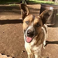 Adopt A Pet :: Beethoven - Long Beach, CA