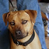 Adopt A Pet :: King Tut - Palmdale, CA