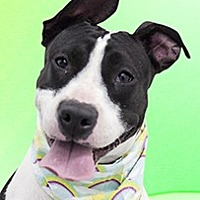 Adopt A Pet :: Princess - Cincinnati, OH