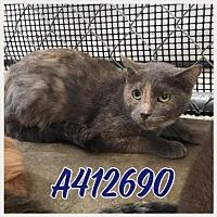 Adopt A Pet :: BITSY - San Antonio, TX