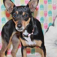 Adopt A Pet :: *DORA - Modesto, CA